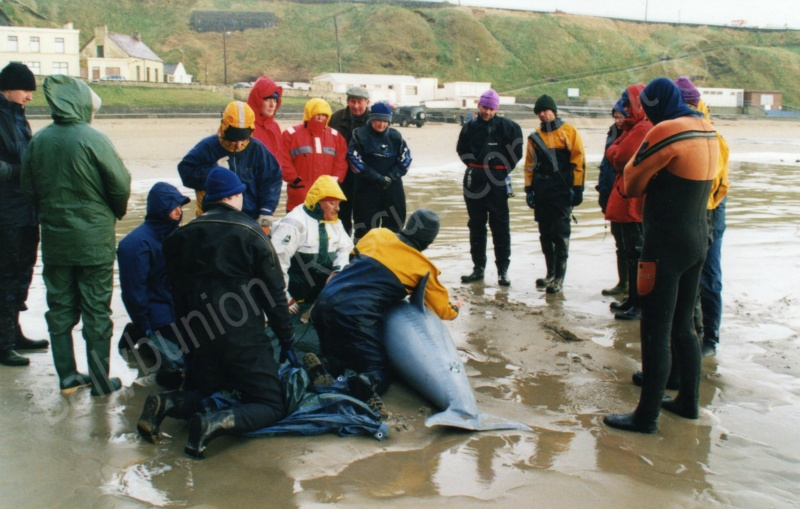Irish Whale and Dolphin rescue training